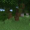 dziwne drzewka.