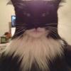 Kotek Batcat