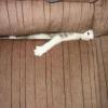 Kotek Zjadany Przez Sofa Przestań Zostaw Kitku Jeden Like = Kotek o Jeden Porcja Mniej Zjedzony
